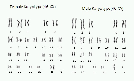 male-female-cryptotype