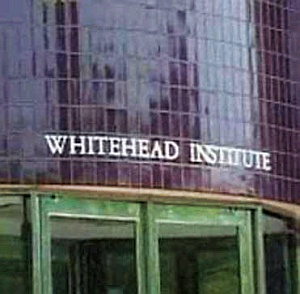 whitehead-institute